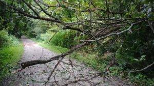 Image of a tree blocking the Trail
