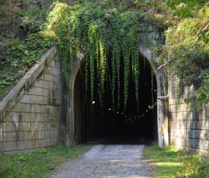Deadly Tunnel Vines